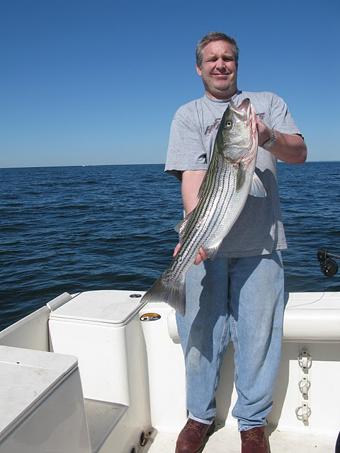 Striped bass 12 for Port jefferson fishing