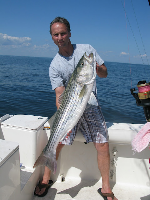 Striped bass 4 for Port jefferson fishing