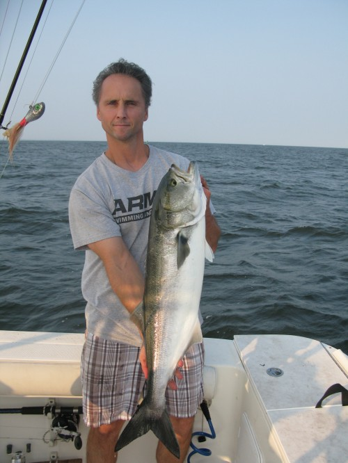 Bluefish for Port jefferson fishing
